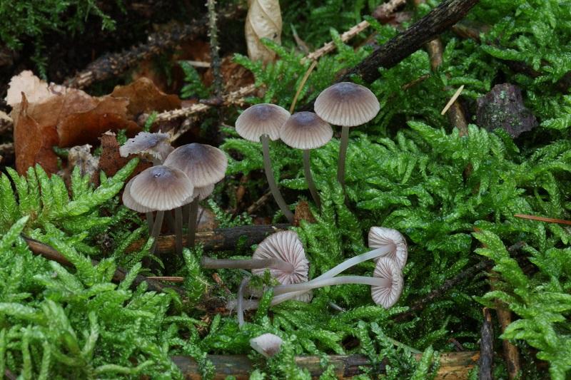 fungi dangers