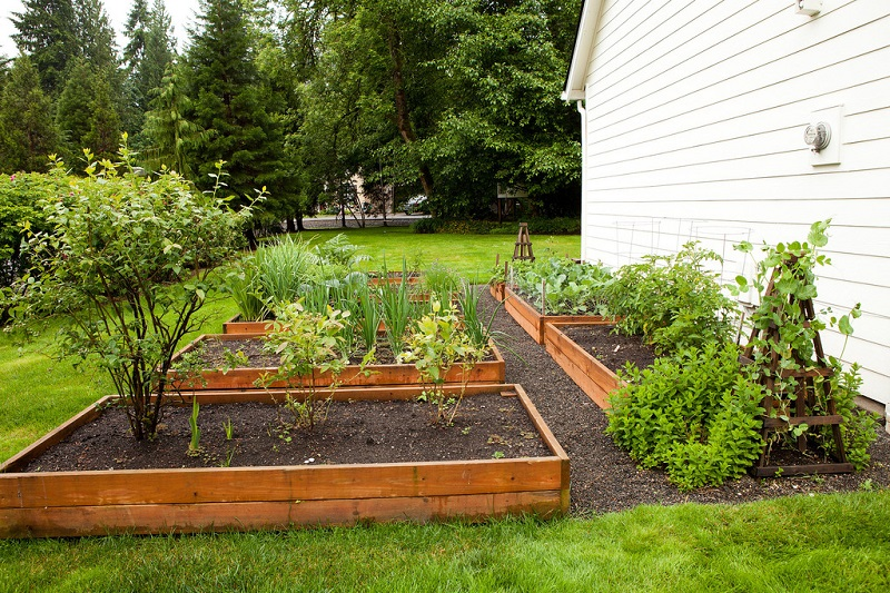Gardening Can Change Your Life
