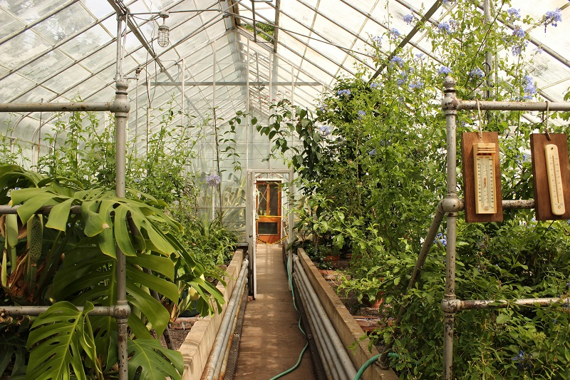 how to greenhouse garden