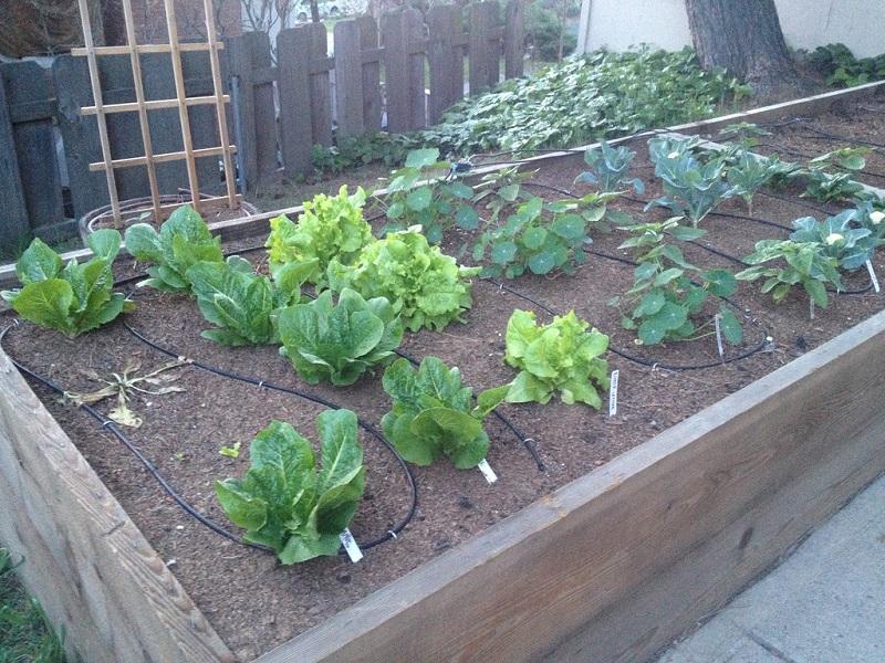 how to grow vegetable garden