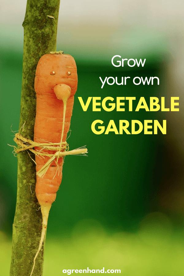 Starting a first vegetable garden | Best soil for vegetable garden #vegetablegarden #gardening #agreenhand