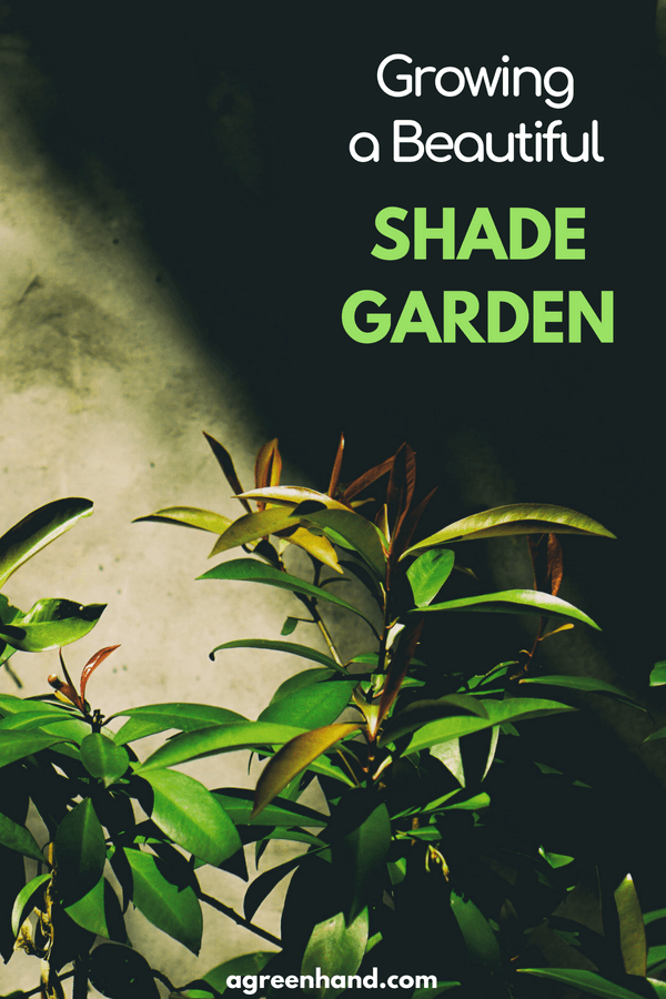 How to grow a beautiful Shade garden | Colorful shade garden #gardening #gardenideas #shadegarden #agreenhand