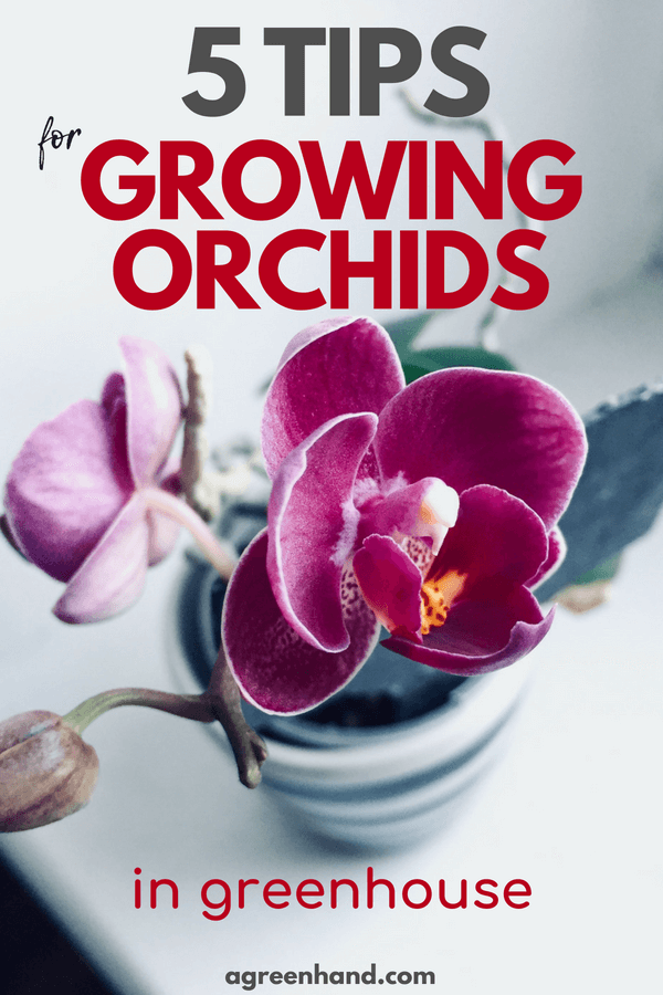 Check out 5 tips on how to grow orchids in greenhouse | Caring for orchids #orchid #garden #gardening #agreenhand