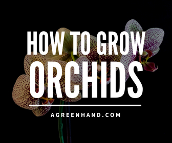 Growing Orchids Series