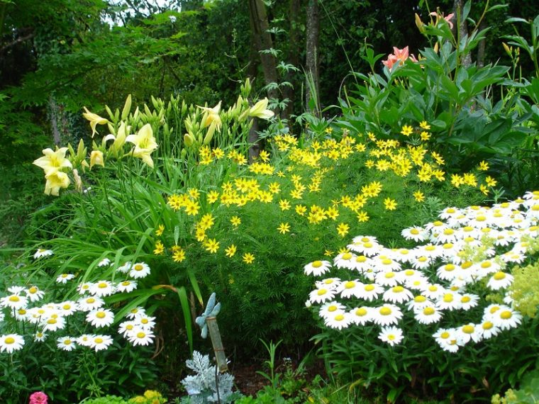 planting perennials in raised beds