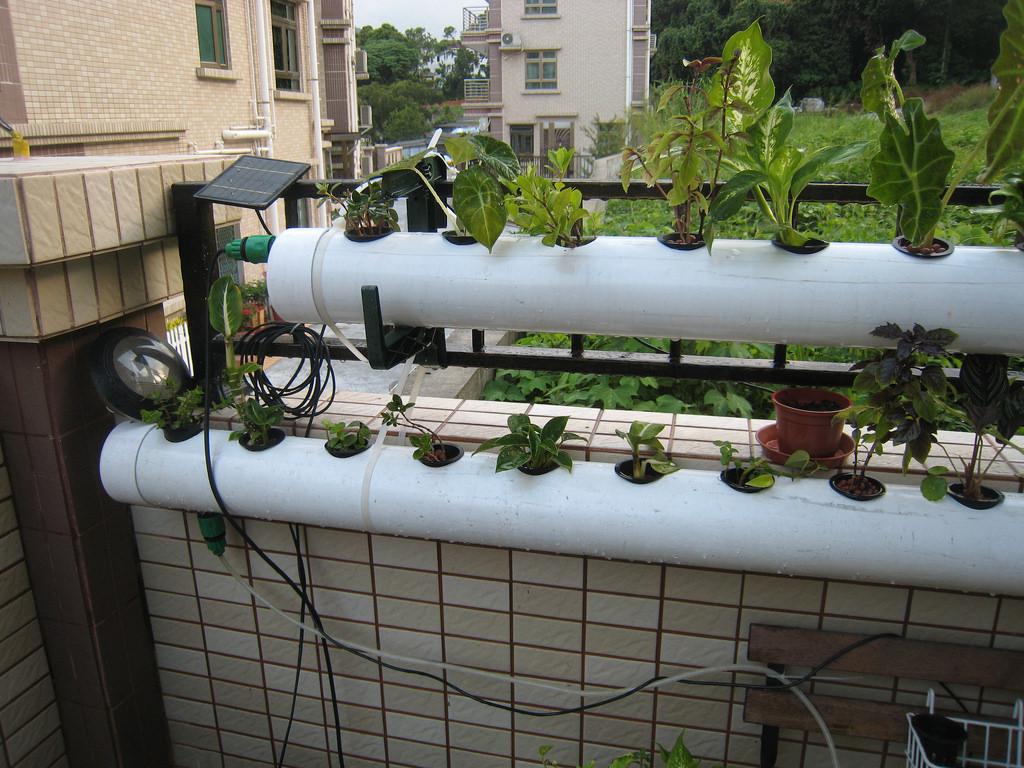 hydroponics vegetable garden