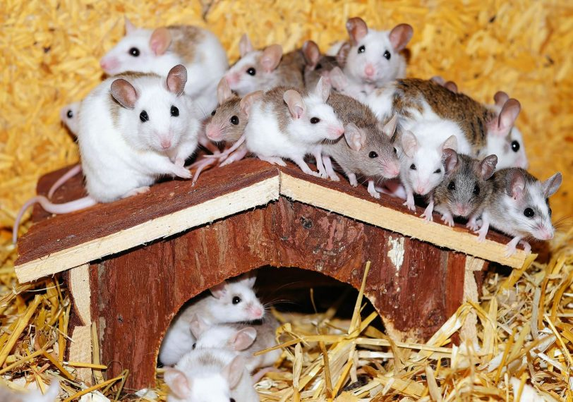 rat and mouse prevention top tips