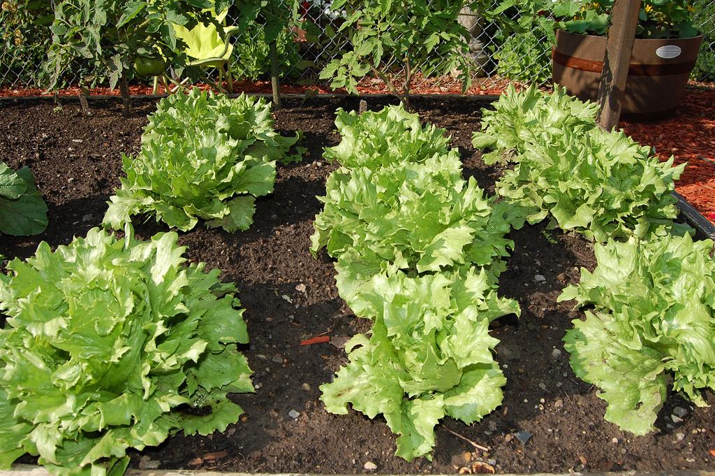 planning vegetable garden