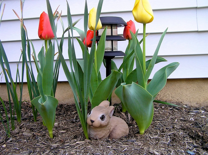 planting tulips in spring