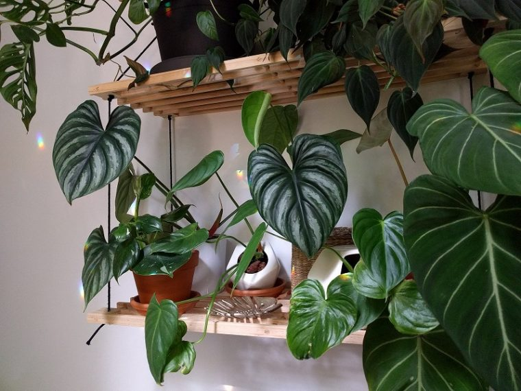 All Year Long Care For Houseplants