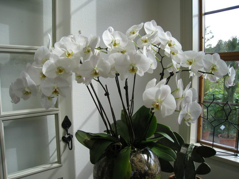 Steps for Repotting Orchids