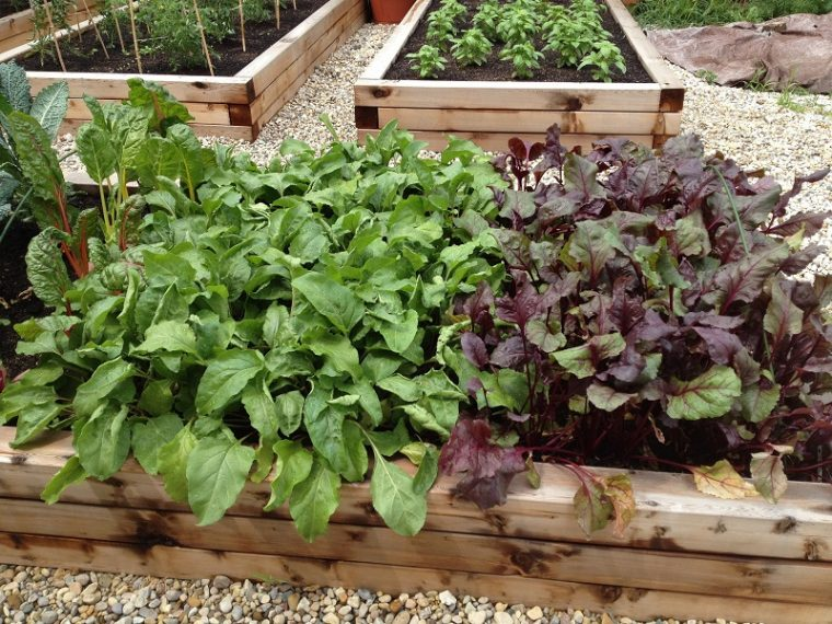 Tips For Organic Vegetable Garden