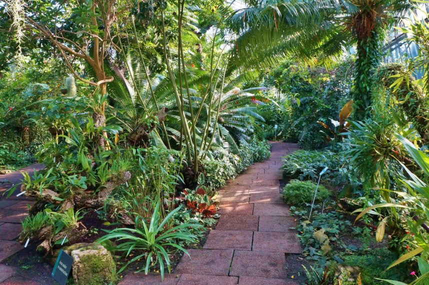 Tropical Gardening Tips and Ideas