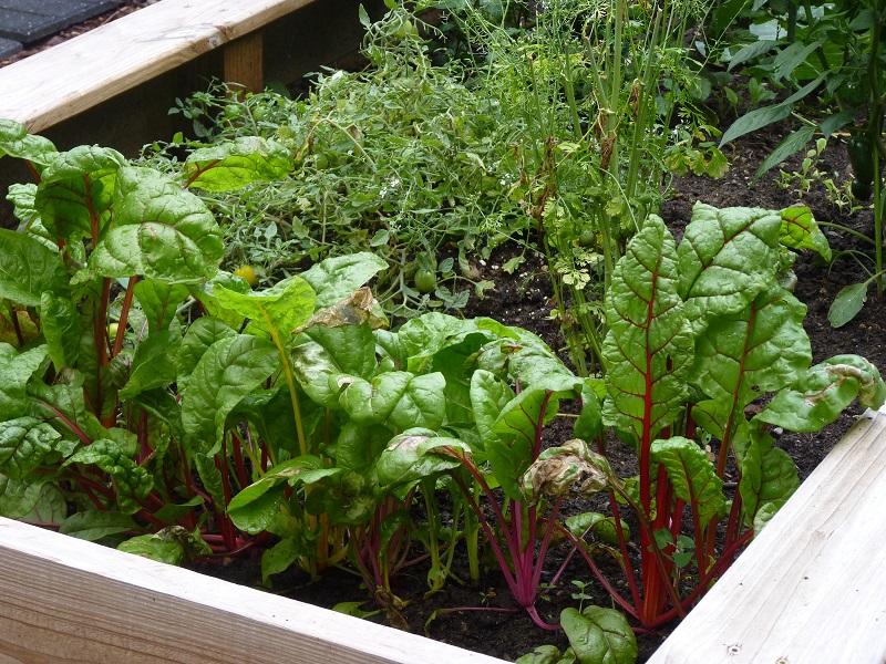 Benefits Of Having Your Own Vegetable Garden