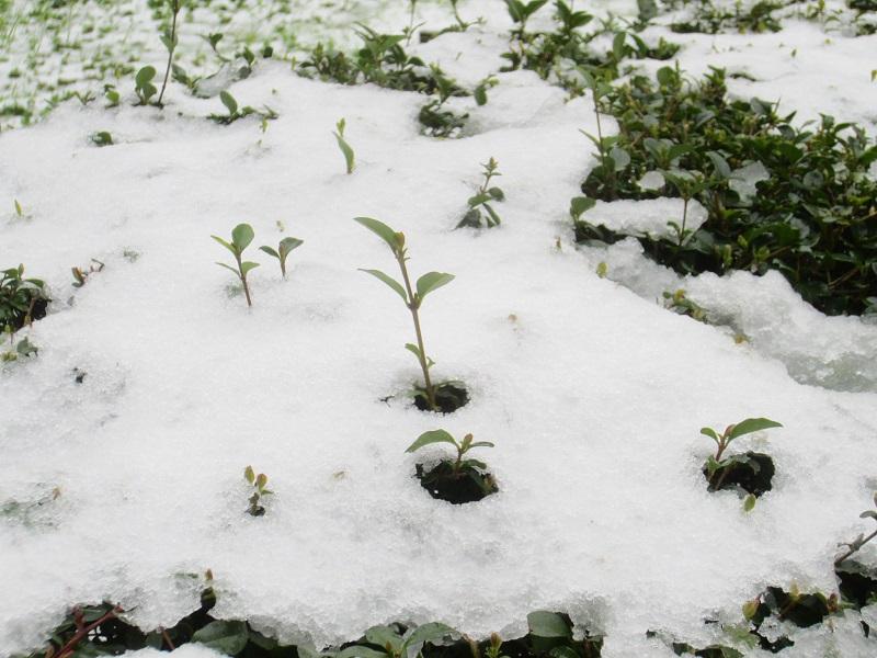 Winter Gardening Tips