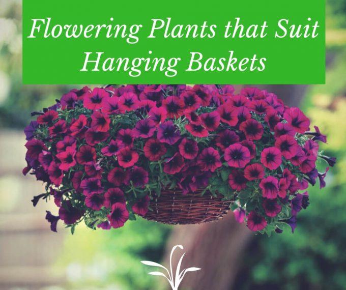 Flower plants that suit hanging baskets