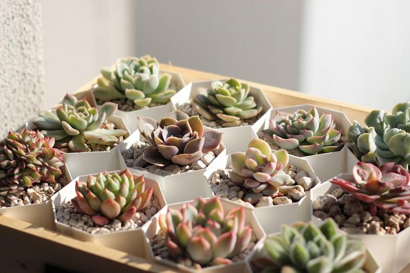 Indoor Succulent gardens