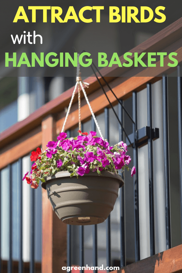 Attract Birds with Hanging Baskets