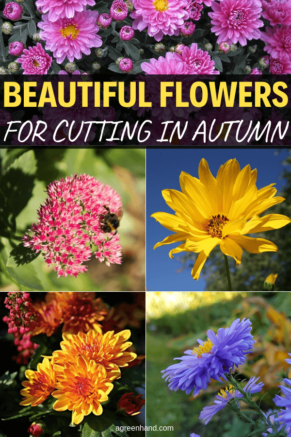 Beautiful Flowers For Cutting In Autumn