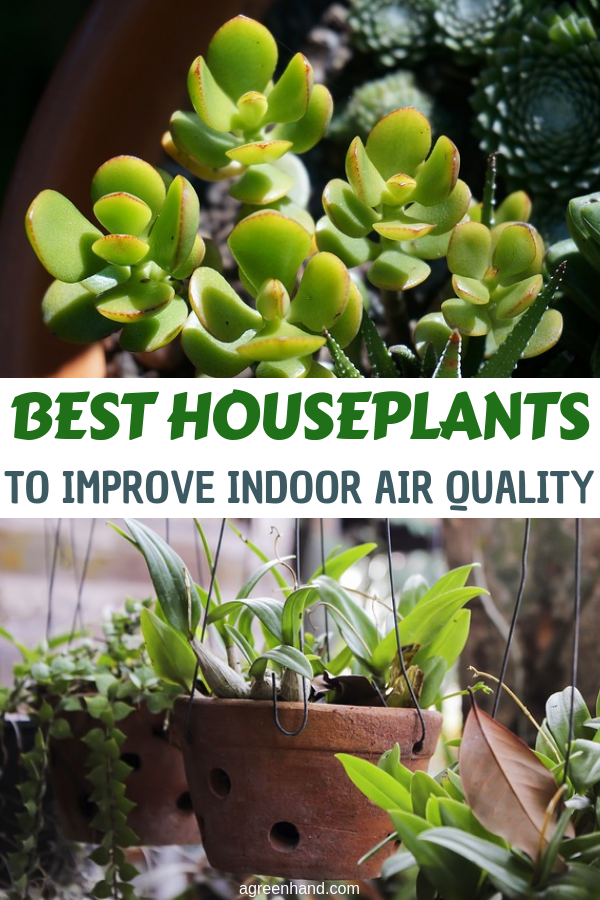 Specific houseplants have been shown to have the capability of absorbing harmful gases and chemicals, quietly improving indoor air quality while adding a touch of beauty. #houseplants #besthouseplants #agreenhand