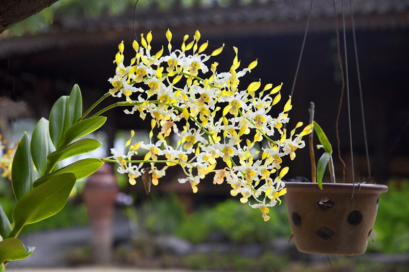 orchid pots