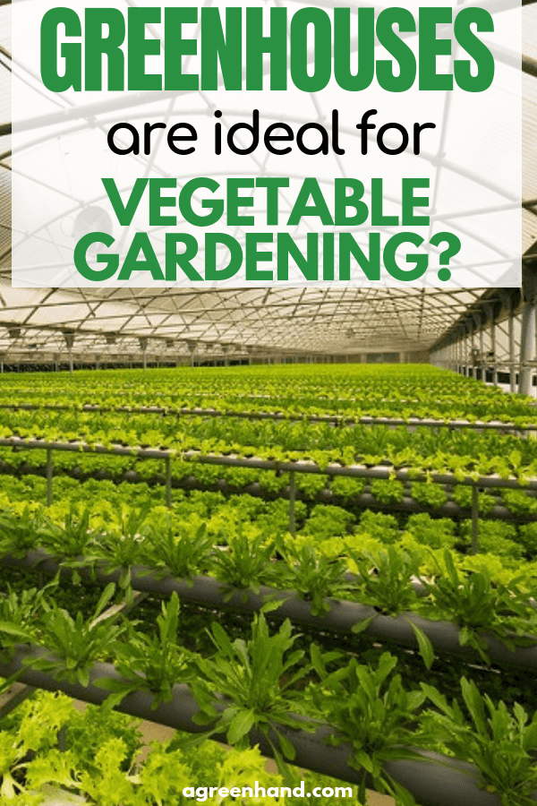 How to grow vegetables in greenhouses