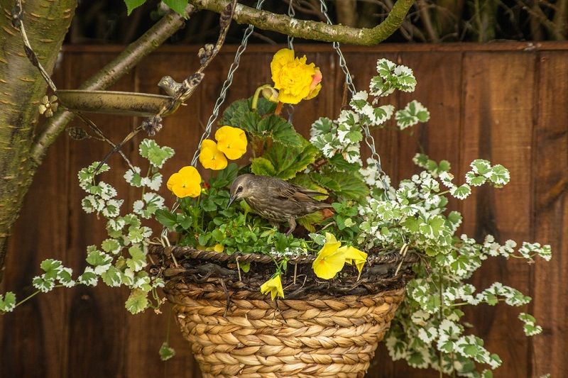 hanging baskets garden