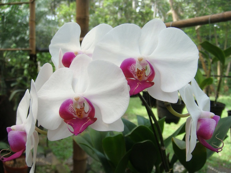 orchid plants care