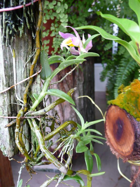 Orchids On Bark