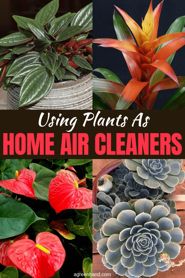 Home air cleaners that use ionic or ozone producing technology can make your inside air pollution problem worse. Using plants is a healthy alternative. #houseplants #indoorplants #agreenhand
