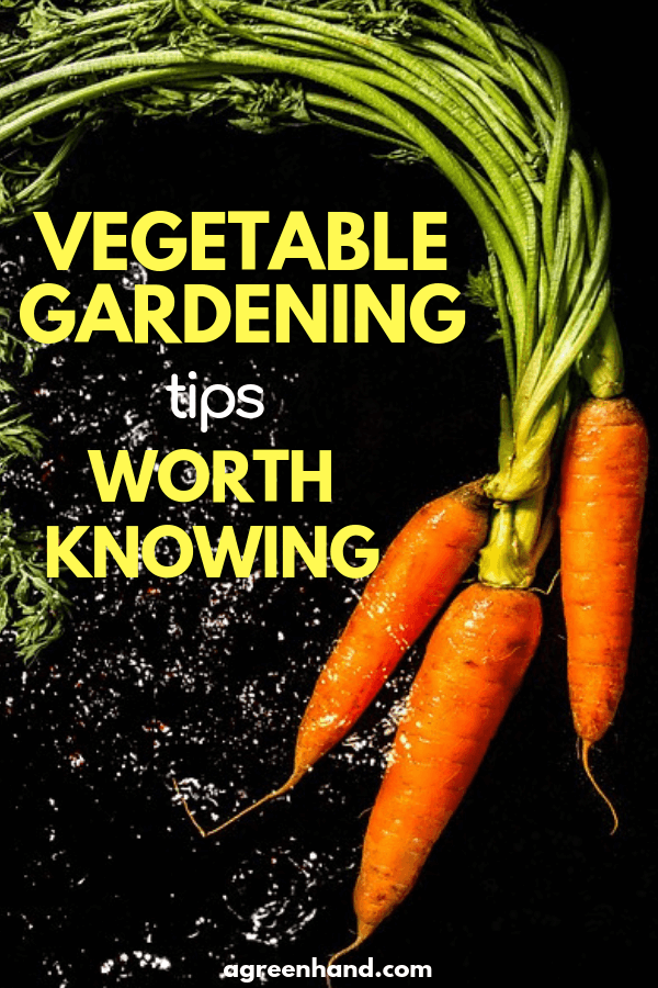 Vegetable Gardening Tips Worth Knowing