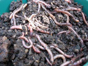 Earthworms