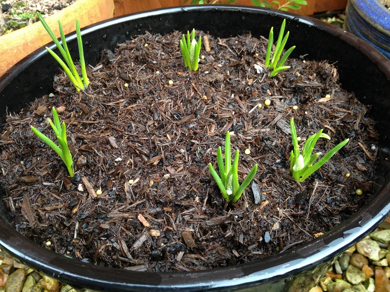 container gardening soil