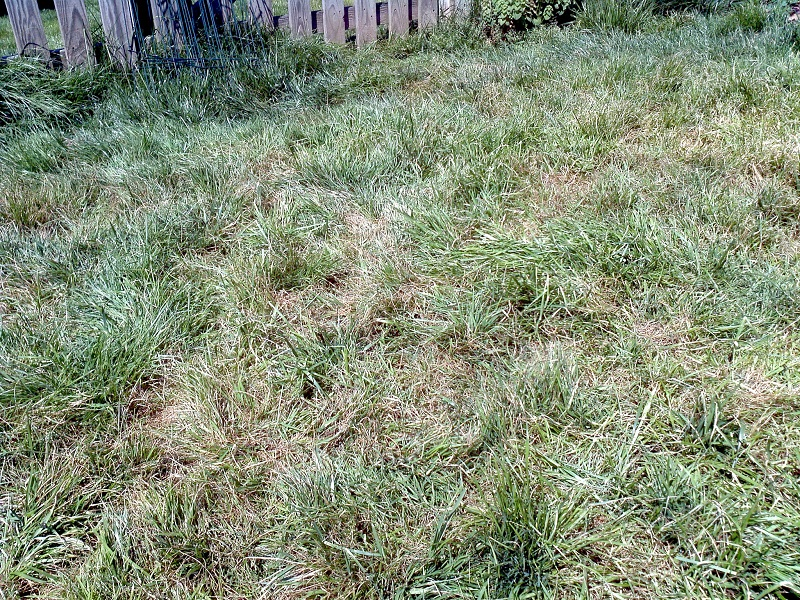 lawn brown patches