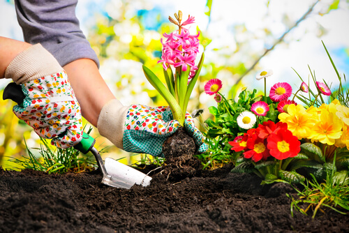 Tips for Maintaining a Beautiful Yard 1