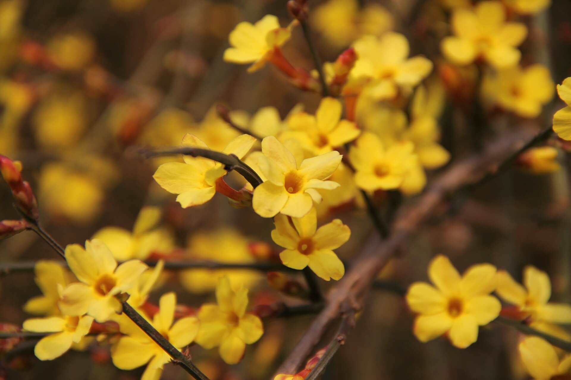 Things You Should Know about Flowers That Grow in Winter 2