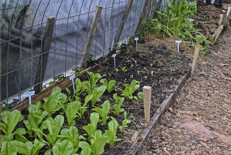 hoop house gardening in winter