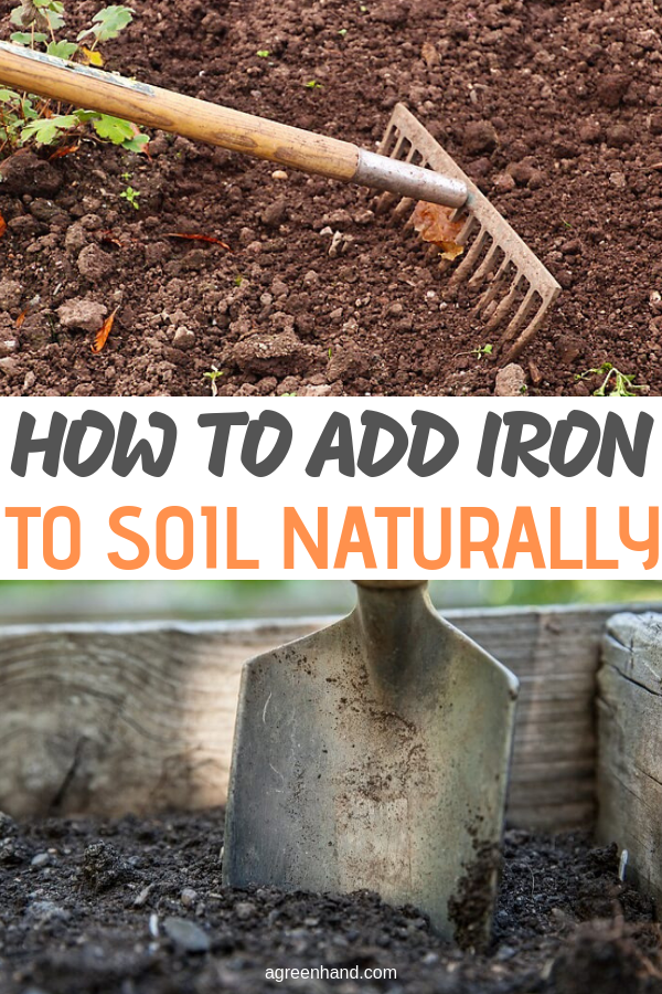 how to add iron to soil