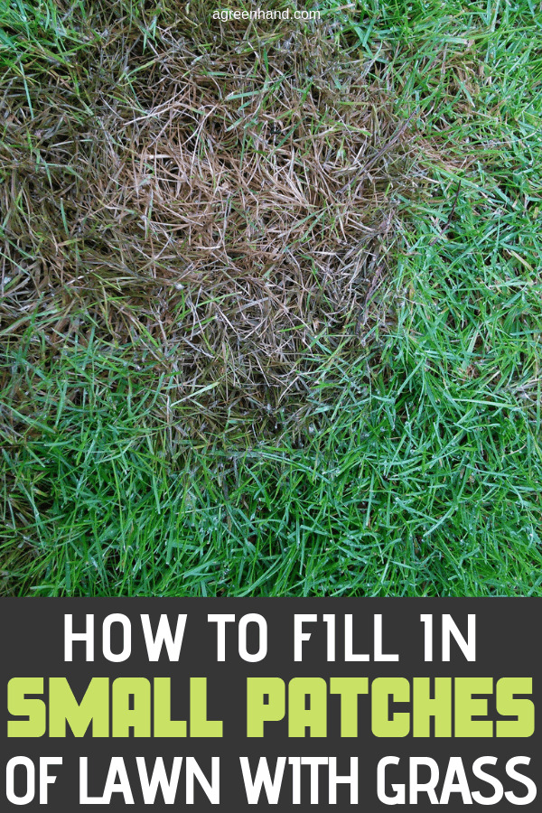 How To Fill In Small Patches Of Lawn With Grass
