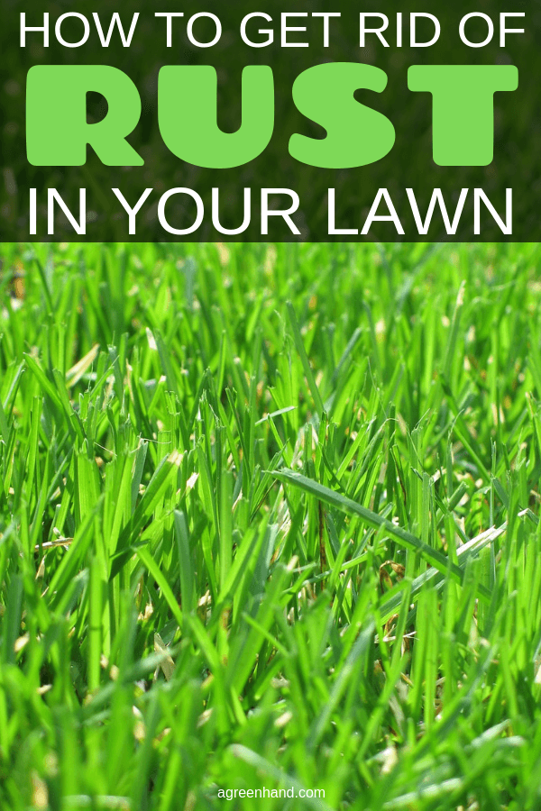 how to get rid of rust in your lawn