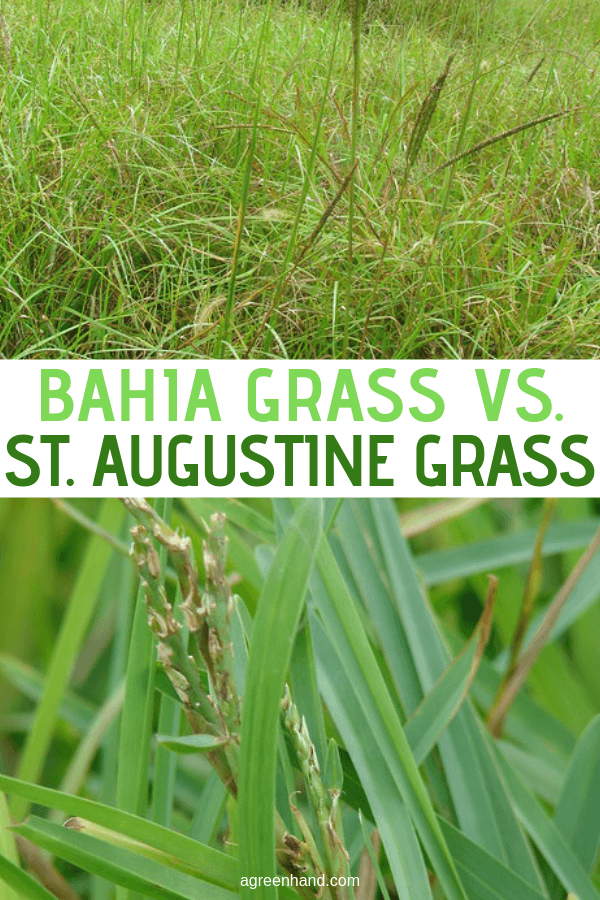 Bahia Grass Vs. St. Augustine Grass