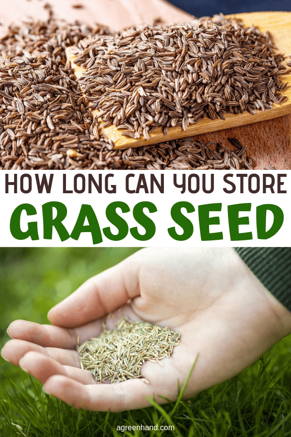 How Long Can You Store Grass Seed #agreenhand #grassseed