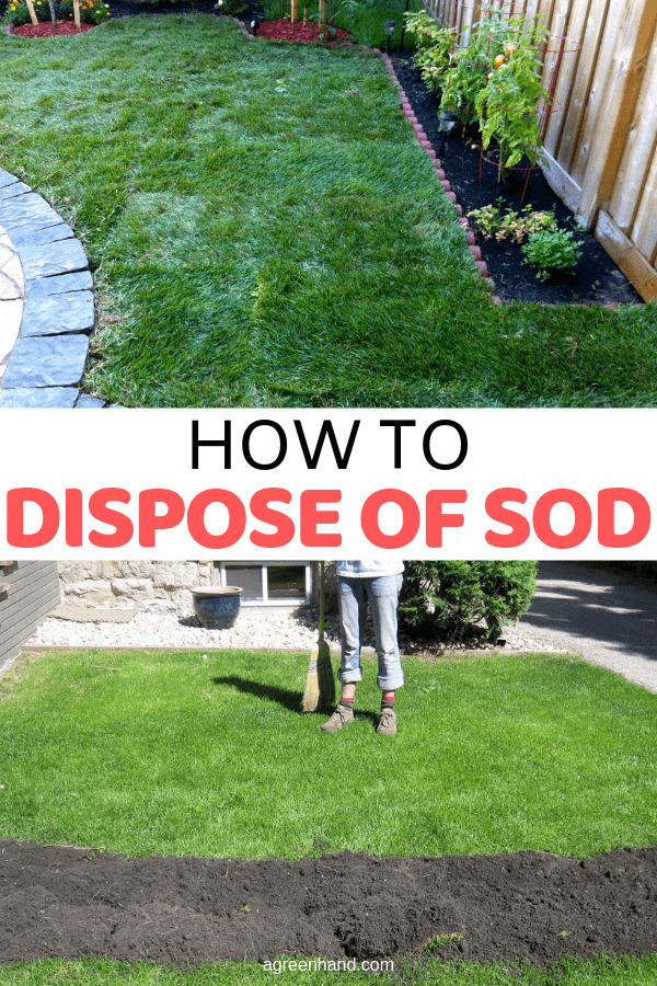 How To Dispose Of Sod #sod #disposesod #lawncare #grass