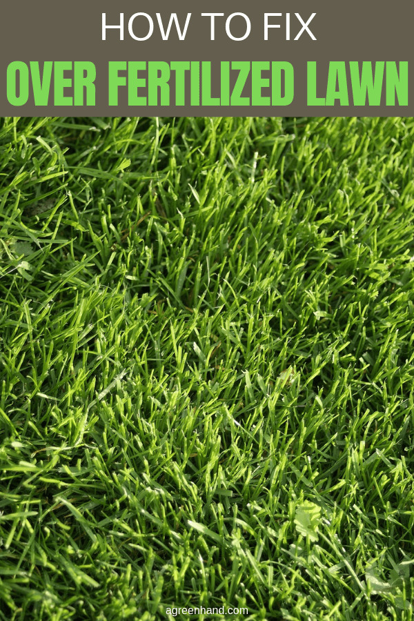 How To Fix Over Fertilized Lawn