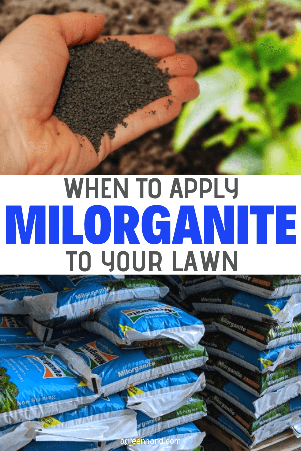 When To Apply Milorganite To Lawn #agreenhand #milorganite #lawnfertilizer #fertilizer