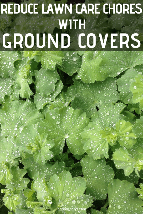 Ground covers are typically used to cover sites where little else will grow, but with a little creative garden design planning these hard-working garden plants are the secret to creating a handsome low maintenance lawn. #agreenhand #lawncare #lawnchores #groundcovers