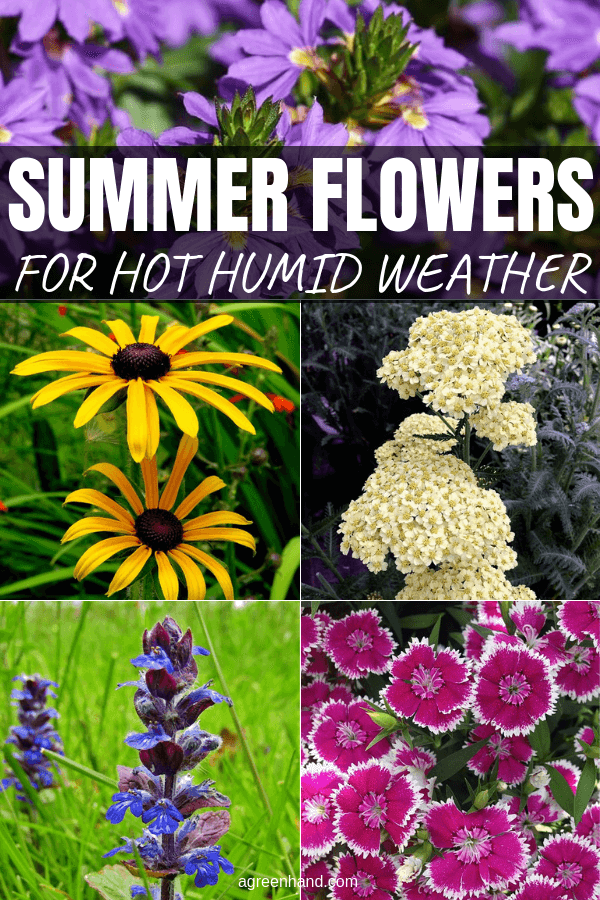 Summer Flowering Plants For Hot Humid Weather