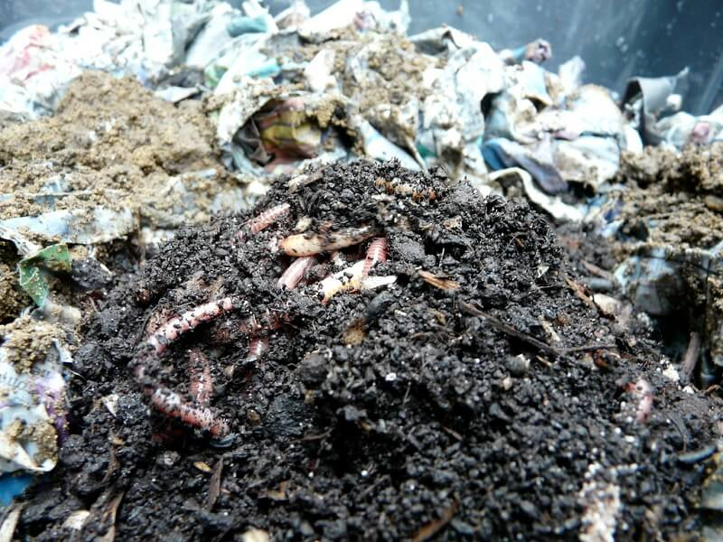 building a worm composter