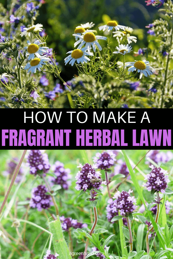 How to Make a Fragrant Herbal Lawn