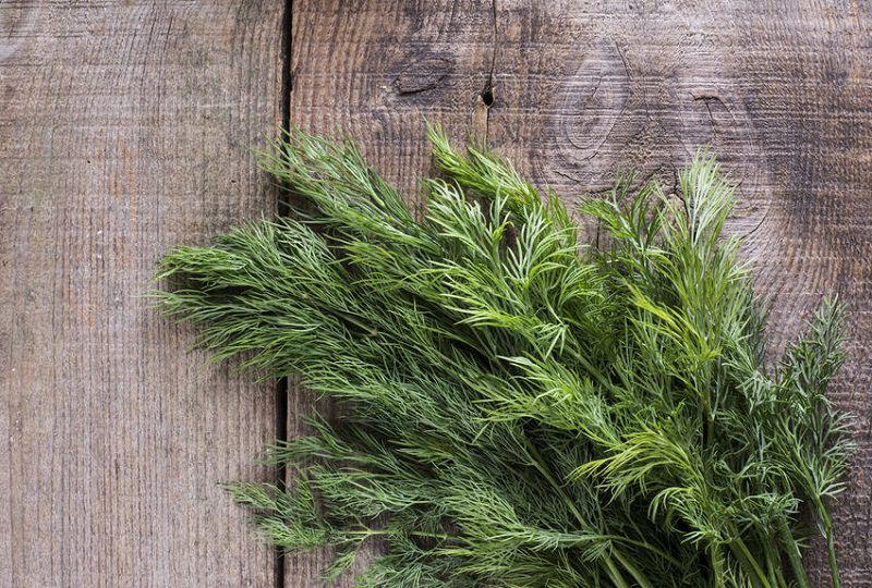 Best Herbs to Grow Indoors 3